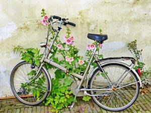 Bike and Flower Leiden