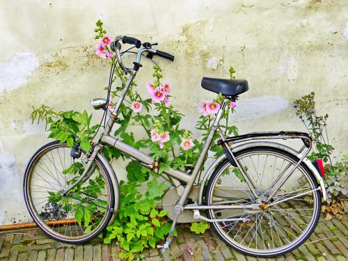 Bike and Flowers Leiden
