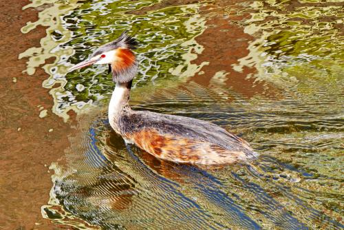 Bird in Leiden canal