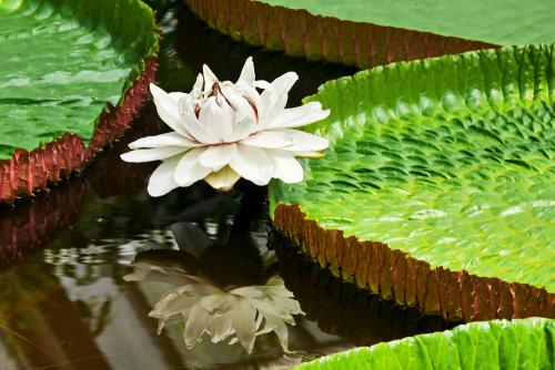 Flower in Hortus Botanicus Leiden
